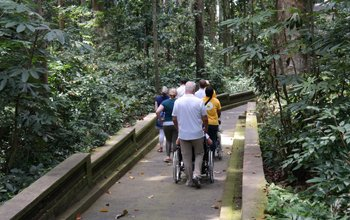 A group with wheelchair users in Monkey Forest Bali