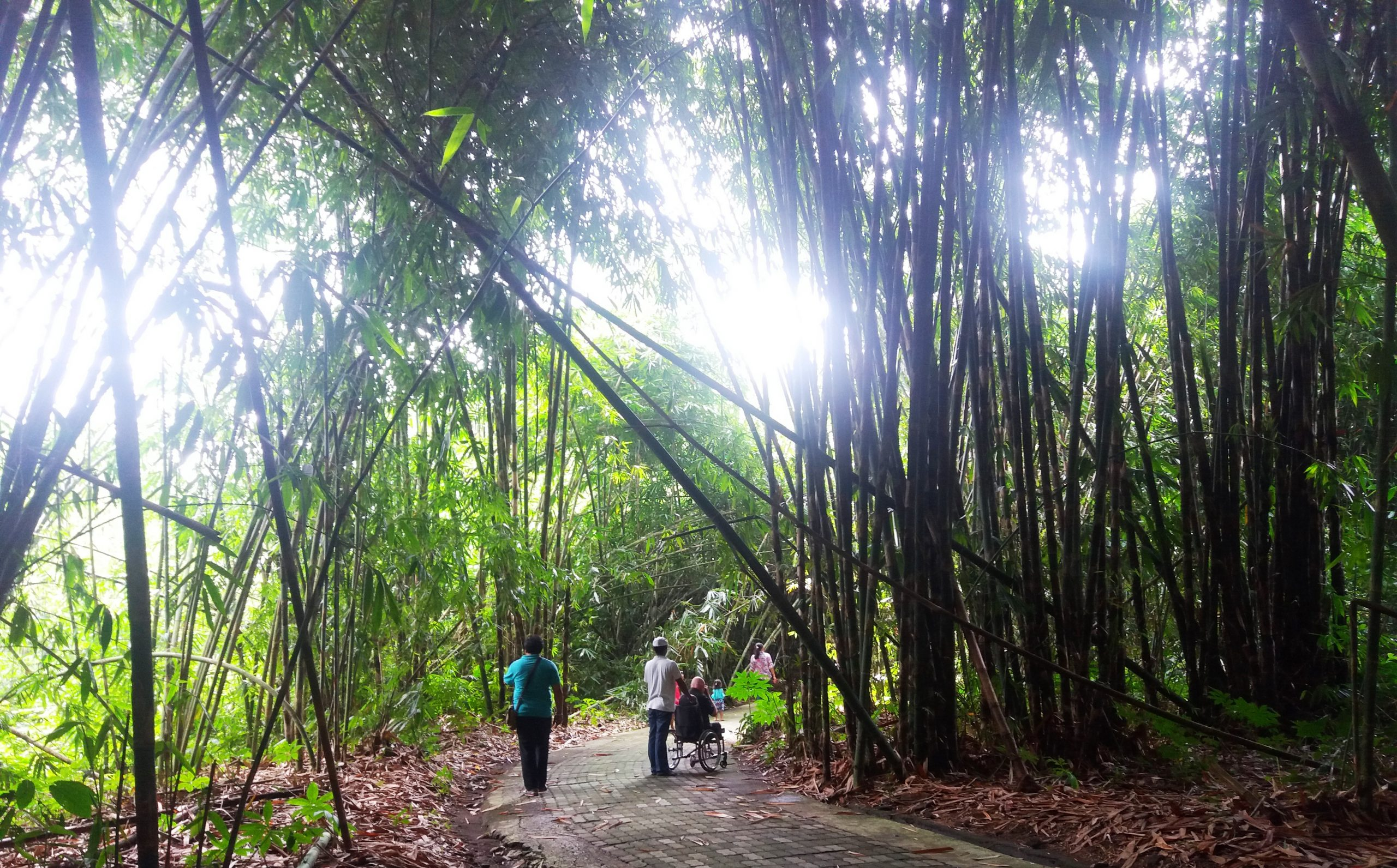 Acessible Bamboo Forest in Bali